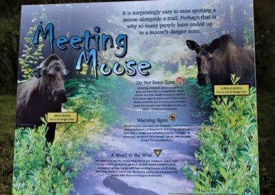 Meeting Moose Newsletter