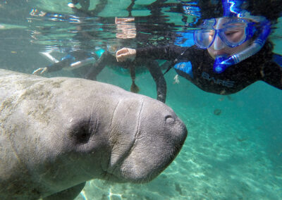 Swimming with the Manatees Crystal River