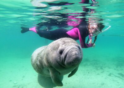 Swim with Manatees Adventure