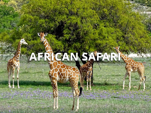 african safari trips