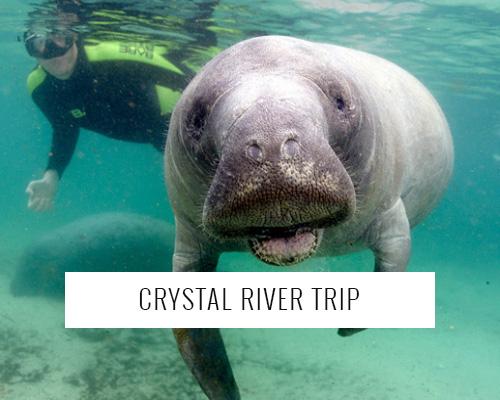 crystal river trip