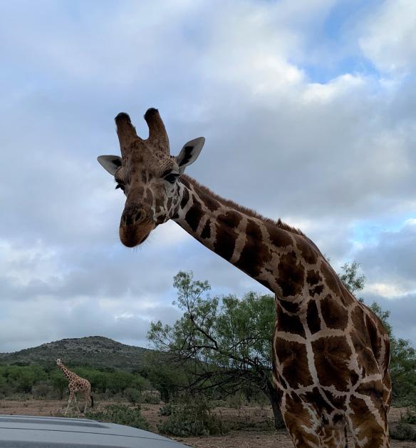 African safari event